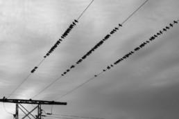 birds on electricity line